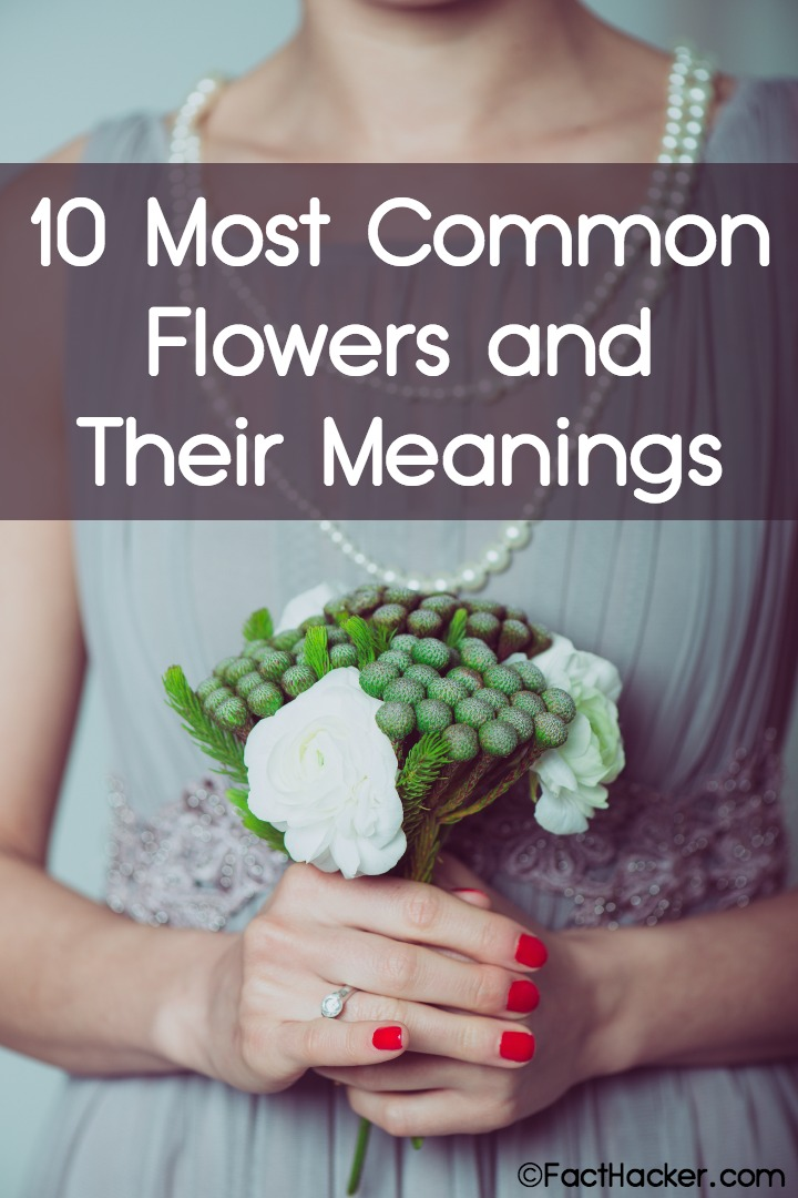 10 Most Common Flowers and Their Meaning ~ https://facthacker.com/most-common-flowers-and-their-meanings/