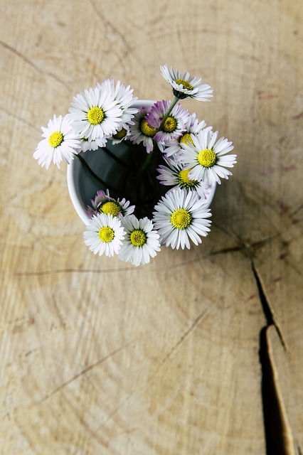 Daisies ~ 10 Most Common Flowers and Their Meanings ~ https://facthacker.com/most-common-flowers-and-their-meanings/